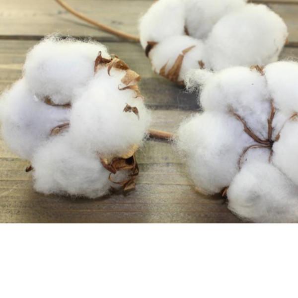 棉花被盖着不舒服-多半是滋生螨虫了[寝夜思家纺]
